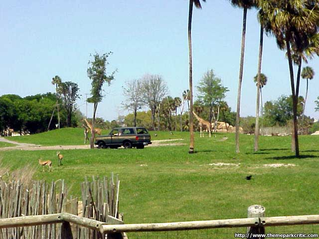 Serengeti Safari Busch Gardens Tampa in Florida Theme Park Critic